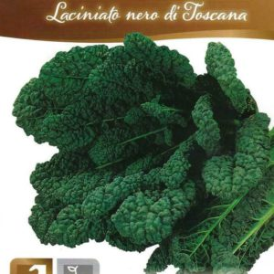 ITALIAN KALE – TOSCANA / BLACK TUSCAN -PICTORIAL PACKET