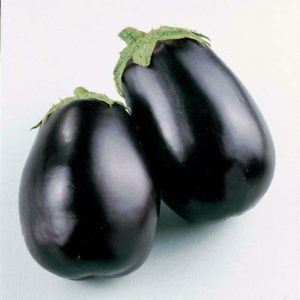 Aubergine Egg Plant Black Beauty