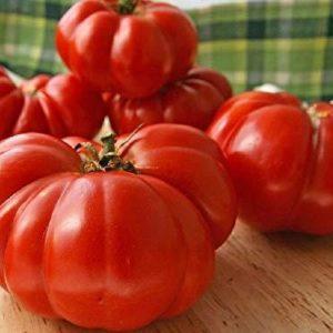 Organic Tomato – COSTOLUTO FIORENTINO