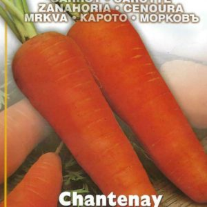 CARROT CHANTENAY PICTORIAL PACKET
