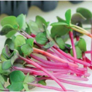 Micro Green Radish Sangria