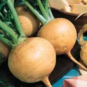 Turnip Golden Globe Organic