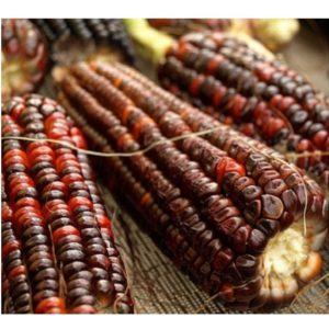 Organic Heirloom Corn Bloody Butcher