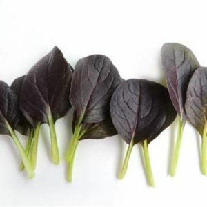 CABBAGE PAK CHOI RED WIZARD F1