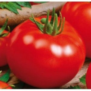 VEGETABLES TOMATO CAMPBELL 33