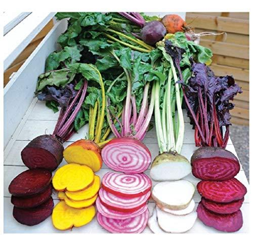 Premier Seeds Direct - Seed Tape Beetroot Rainbow Mix 6M (3X2M) ~ Approx 420 Seeds