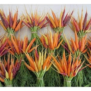 PREMIER SEEDS DIRECT - Seed Tape Carrot Rainbow Mix 6M (3X2M) ~ Approx 540 Seeds