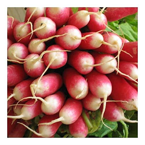 PREMIER SEEDS DIRECT -Seed Tape Radish French Breakfast 6M (3X2M) ~ Approx 540 Seeds
