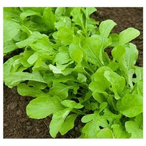 Seed Tape Rocket Cultivated 6M (3X2M) ~ Approx 600 Seeds