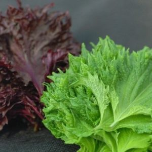 Vegetables Perilla Shiso Red