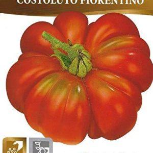 Tomato COSTOLUTO FIORENTINO – Pictorial Packet