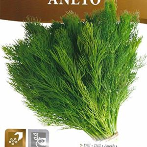 HERB Dill – PICTORIAL Packet