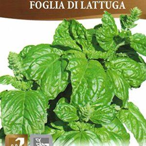 Basil – FOGLIA DI LATTUGA – Pictorial Packet