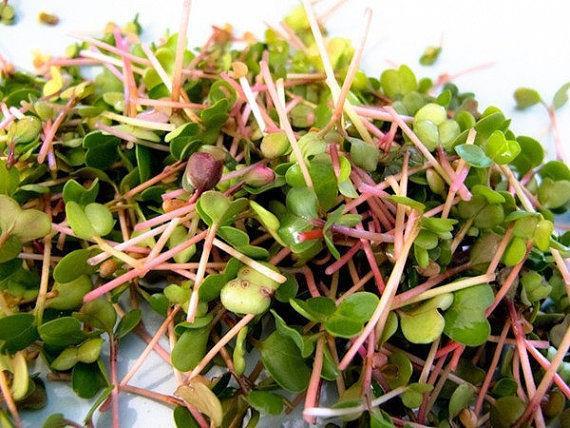 Organic Sprouting Seeds China Rose