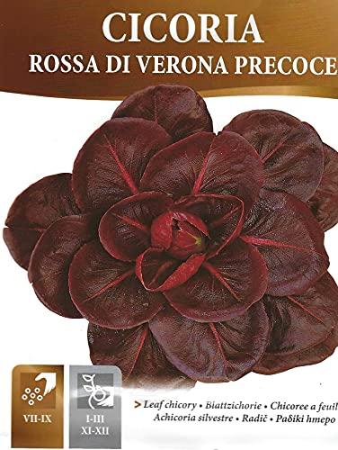 Chicory Rossa DI VERONA PRECOCE - PICTORIAL Packet